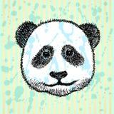Sketch head of panda, vector background Stock Image