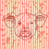 Sketch head of pig, vector  background Stock Photo