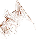 Sketch of the head of a young cat Stock Photos