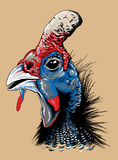 Sketch of a helmeted guinea fowl's head Royalty Free Stock Image