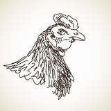 Sketch of hen head Stock Photos