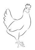Sketch of Hen. Isolated on white Royalty Free Stock Photo