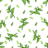 Sketch herbal mint tea. Hand drawn vector seamless pattern Stock Photo