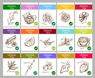 Sketch Herbal Tea Labels Collection Stock Images