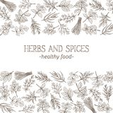 Sketch herbs and spices vector illustration