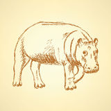 Sketch hippo, vector vintage background Royalty Free Stock Images