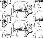 Sketch hippo, vector vintage seamless pattern Royalty Free Stock Photography