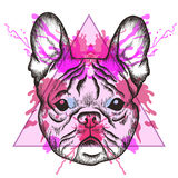 Sketch Hipster French bulldog face in triangle frame with waterc Royalty Free Stock Photos