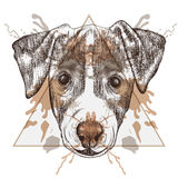 Sketch Hipster Jack Russel Terrier face in triangle frame with Stock Photography