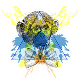 Sketch Hipster Monkey with bow tie  in triangle frame with water Royalty Free Stock Images