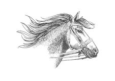 Sketch of horse head in a bridle Royalty Free Stock Photography