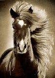 Sketch horse Stock Photo