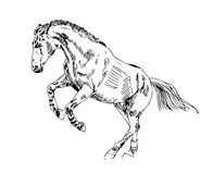 Sketch horse play  Stock Images
