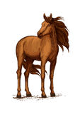 Sketch of horse standing, wild mustang or stallion. Stand of horse stallion or broodmare sketch. Mustang or domestic chestnut mammal, wild purebred animal with Stock Images