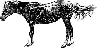 Sketch of horse Royalty Free Stock Photo