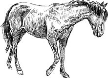 Sketch of horse Royalty Free Stock Images