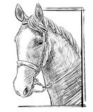 Sketch of a horses head 2 Stock Image