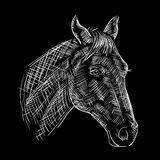 Sketch of a horses head Stock Images