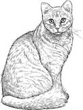 Sketch of a house cat Stock Photos