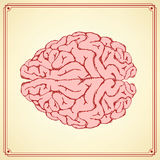 Sketch human  brain in vintage style Royalty Free Stock Photo