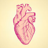 Sketch human heart in vintage style Stock Photo
