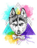 Sketch of husky. Beautiful hand drawn vector illustration sketching of husky. Tattoo style drawing. Use for postcards, print for t-shirts, posters Royalty Free Stock Images