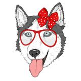 Sketch of husky dog girl in red dotted bow