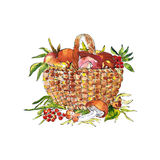 Sketch illustration of basket with mushrooms Stock Photos