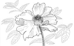 Sketch illustration flower Stock Photo