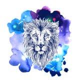 Sketch illustration lion Stock Photography