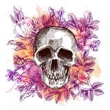 Sketch illustration the skull. Stock Photos