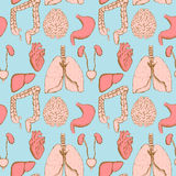 Sketch internal organs in vintage style Royalty Free Stock Images