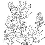 Sketch with Iris flowers Royalty Free Stock Photo