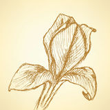 Sketch iris,  vintage background Royalty Free Stock Images