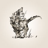 Sketch isolerade utdraget vid en liten gullig kattunge Royaltyfria Bilder