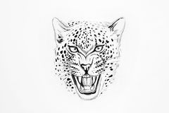 Sketch of a jaguar on white background. Stock Photos