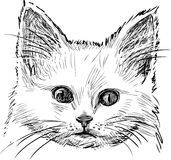 Sketch of kitten Royalty Free Stock Images