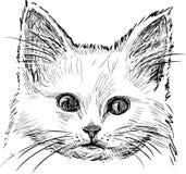 Sketch of kitten stock illustration