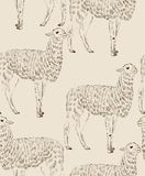 Sketch Lama Stock Image