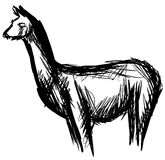Sketch of a Lama in black isolated Royalty Free Stock Photo