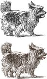 Sketch of a lap dog on a stroll. Vector drawing of a walking lap dog royalty free illustration