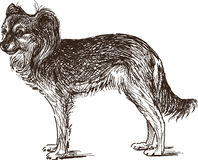 Sketch of lap dog. Vector drawing of the little dog stock illustration