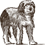 Sketch of a lap dog. Vector drawing of a small homeless dog vector illustration