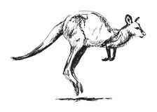 Sketch leaping kangaroo Stock Photography