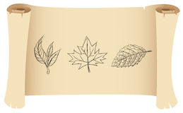 Sketch of leaves Stock Photos