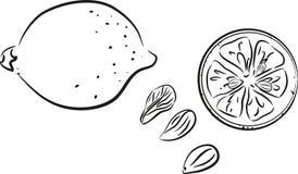 Sketch of lemon Stock Image