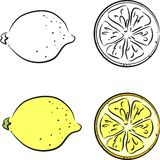 Sketch of lemon Royalty Free Stock Image