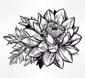 Sketch of lily lotus flower in linear style. Stock Images