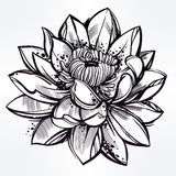 Sketch of lily lotus flower in linear style. Royalty Free Stock Photo