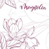 Sketch linear magnolia blossom. Floral background. Hand drawn vector botanical illustration. Template greeting card, wedding invitation banner with spring Royalty Free Stock Image
